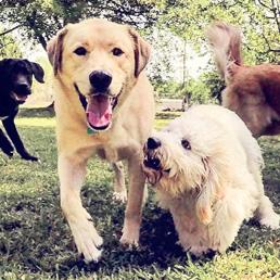 Dog Daycare Charleston