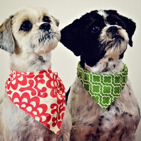Charleston dog boarding charleston dog training chucktown charley dog grooming photos solutioingenieria Gallery