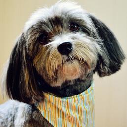 Charleston Dog Grooming